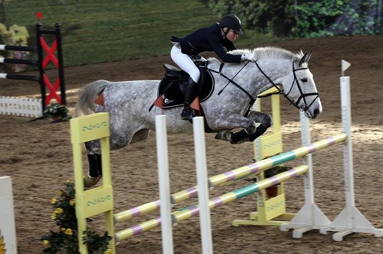 Пони-школа верховой езды на пони для детей Детская